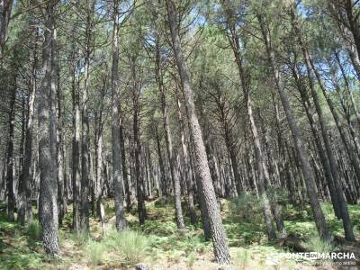 Pinares de Piedralaves; parques naturales madrid viajes en septiembre rutas la pedriza